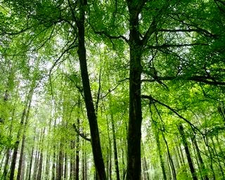 forests-wallpaper-collection-for-nexus-seven-series-one-06