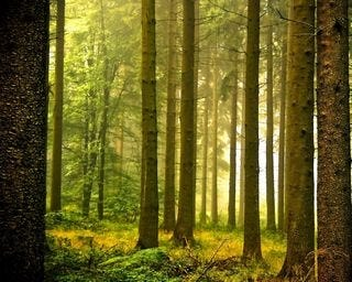 forests-wallpaper-collection-for-nexus-seven-series-one-07