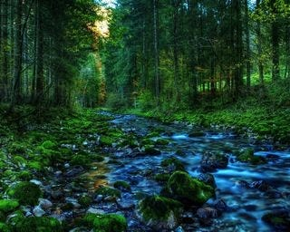 forests-wallpaper-collection-for-nexus-seven-series-one-09