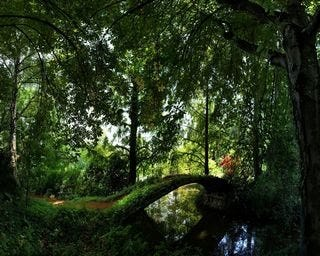 forests-wallpaper-collection-for-nexus-seven-series-one-10