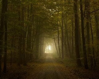 forests-wallpaper-collection-for-nexus-seven-series-one-11