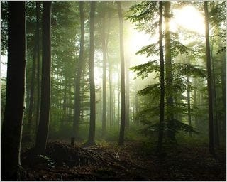 forests-wallpaper-collection-for-nexus-seven-series-one-12