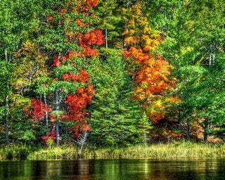 forests-wallpaper-collection-for-nexus-seven-series-one-13