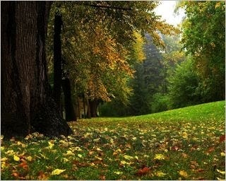 forests-wallpaper-collection-for-nexus-seven-series-one-14