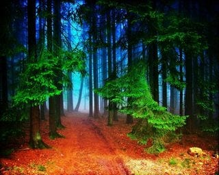 forests-wallpaper-collection-for-nexus-seven-series-one-15