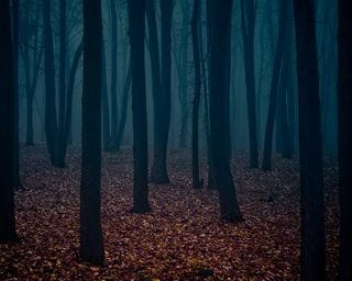 forests-wallpaper-collection-for-nexus-seven-series-one-16
