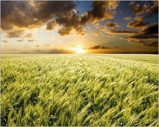 summer-fields-wallpaper-collection-for-nexus-seven-series-one-02