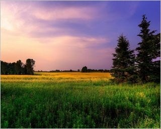 summer-fields-wallpaper-collection-for-nexus-seven-series-one-06