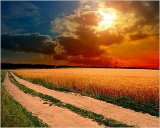 summer-fields-wallpaper-collection-for-nexus-seven-series-one-10