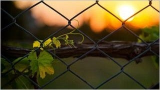 fences-wallpaper-collection-series-two-02