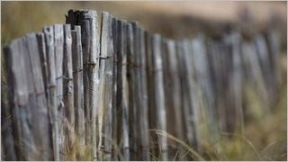 fences-wallpaper-collection-series-two-03