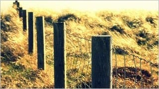 fences-wallpaper-collection-series-two-13