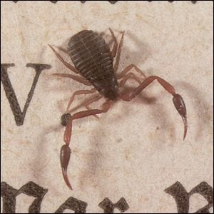A close up photo of a tiny book scorpion, hardly bigger than the letters on the page