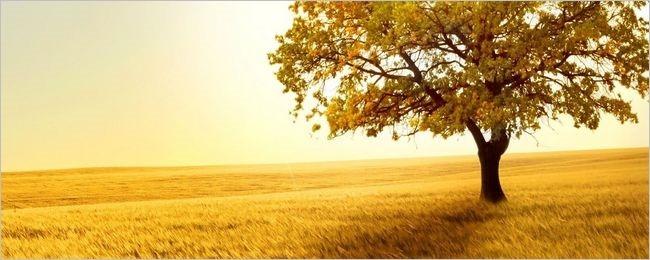 summer-fields-wallpaper-collection-for-nexus-seven-series-one-00