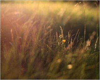 summer-fields-wallpaper-collection-for-nexus-seven-series-one-08