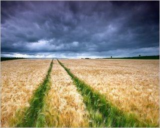 summer-fields-wallpaper-collection-for-nexus-seven-series-one-09