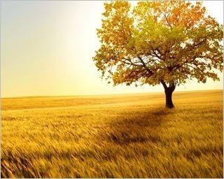 summer-fields-wallpaper-collection-for-nexus-seven-series-one-12