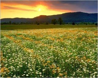 summer-fields-wallpaper-collection-for-nexus-seven-series-one-13