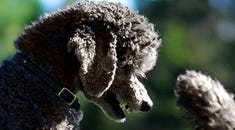 What is the POODLE Vulnerability and How Can You Protect Yourself?