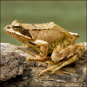 A frog sitting on a tree branch.
