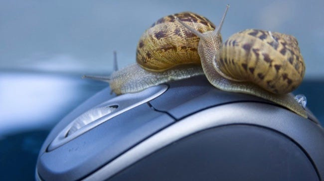snails on mouse