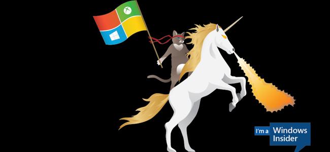 The Insider Program's Ninja Cat mascot riding a unicorn