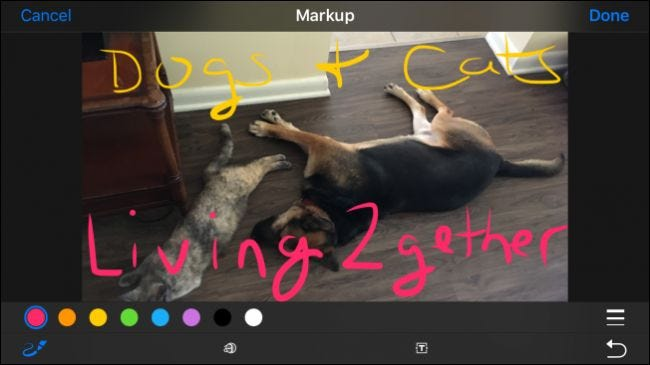 How to Mark Up and Share Your Apple Photos