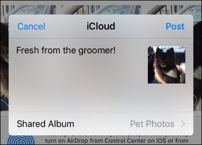 How To Create Shared And Collaborative Photo Albums On Your IPhone