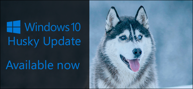 Please Name Windows 10 Updates After Dogs
