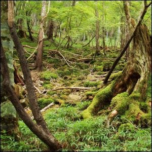 "The Practice Of ""Forest Bathing"", Walking In Woodland Areas For Health Purposes, Originated In?"