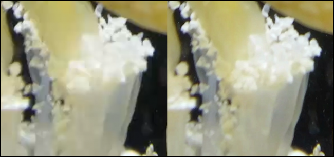 Zoomed in frame of jellyfish.  Left is coded with a reasonable 3Mb / s, right is coded with very high 100Mb / s.