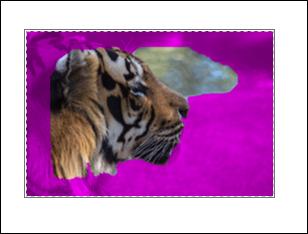 Auto-detect remove background image