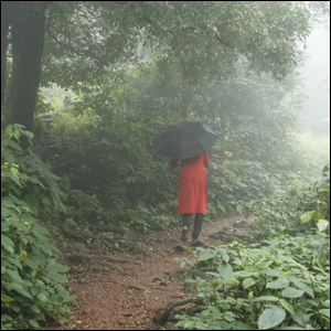 Person walking through a rainy forest with an umbrella