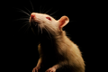 What is RAT Malware, and Why Is It So Dangerous?