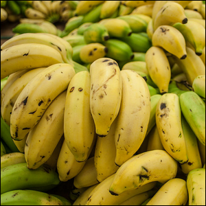 A pile of ripe and unripened Cavendish bananas