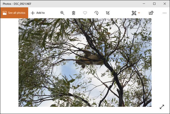 The RAW image opens effortlessly in the Photos app