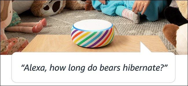 "An Echo Kid's Edition in a child's bedroom, with the question ""How long do bears hibernate?"""