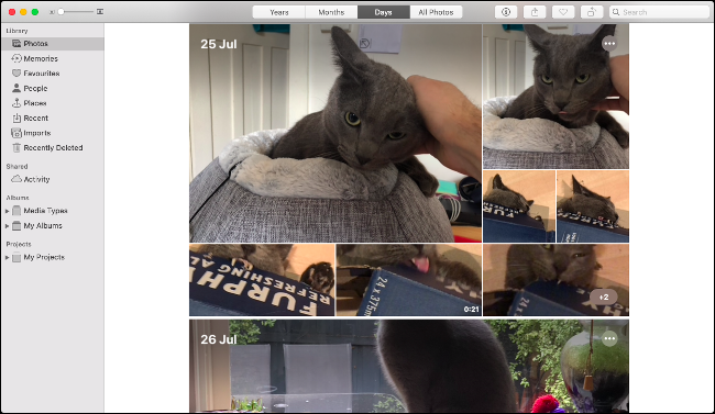 The Photos app in macOS Catalina showing a series images of a gray cat.