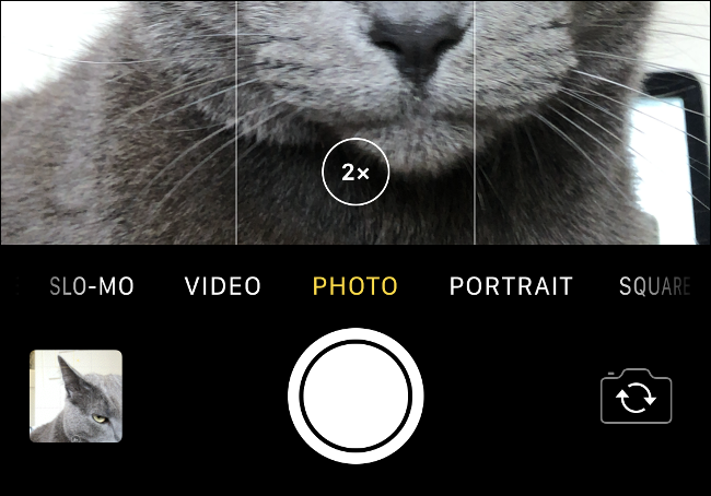 "The ""2x"" Zoom Control on an image of a gray cat in the iPhone Camera app."