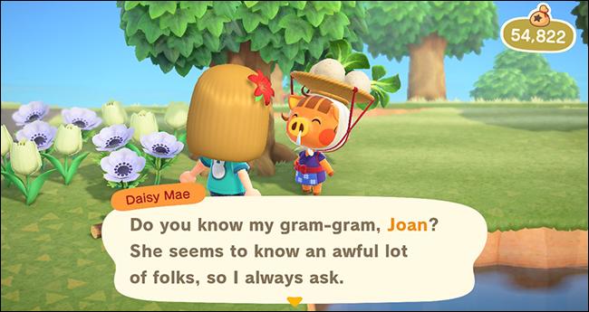 Animal Crossing New Horizons Daisy Mae