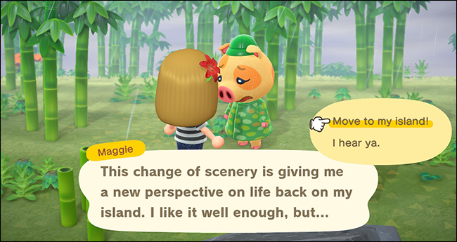 Animal Crossing New Horizons maggie