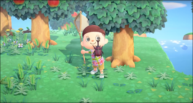 Collecting bugs in the Animal Crossing: New Horizons game