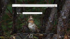 How to Get Bing's Daily Photos as Your Wallpaper on Windows 10