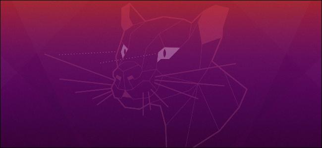 Ubuntu's Focal Fossa logo from its desktop background.