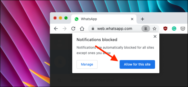 Allow notifications for WhatsApp Web