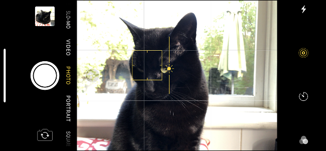 A cat's face with the tap to focus option appearing in the iPhone Camera app.