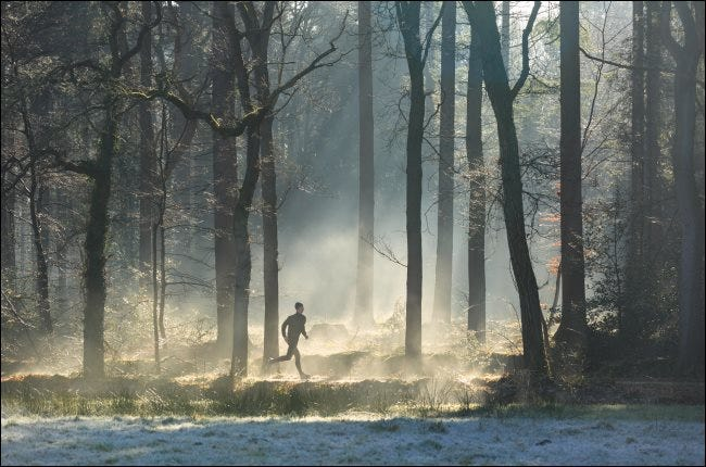 A runner in a foggy forest.