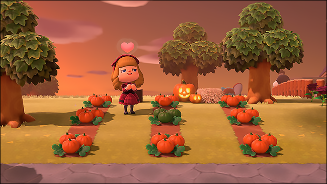 ACNH pumpkins