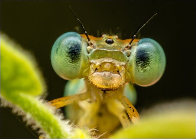 A macro shot of an insect.