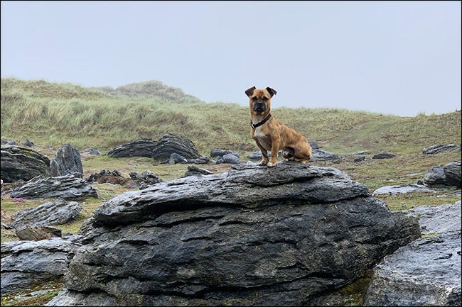 bing the dog on a rock